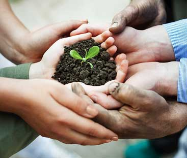 Hands holding soil and a seedling